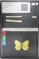 http://mczbase.mcz.harvard.edu/specimen_images/ent-lepidoptera/images/2011_02_24/IMG_072744.JPG