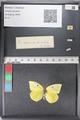 http://mczbase.mcz.harvard.edu/specimen_images/ent-lepidoptera/images/2011_02_24/IMG_072752.JPG