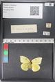 http://mczbase.mcz.harvard.edu/specimen_images/ent-lepidoptera/images/2011_02_24/IMG_072756.JPG