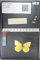 http://mczbase.mcz.harvard.edu/specimen_images/ent-lepidoptera/images/2011_02_24/IMG_072757.JPG