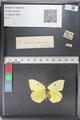 http://mczbase.mcz.harvard.edu/specimen_images/ent-lepidoptera/images/2011_02_24/IMG_072759.JPG