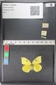 http://mczbase.mcz.harvard.edu/specimen_images/ent-lepidoptera/images/2011_02_24/IMG_072764.JPG