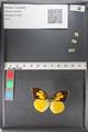 http://mczbase.mcz.harvard.edu/specimen_images/ent-lepidoptera/images/2011_02_24/IMG_072766.JPG