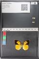 http://mczbase.mcz.harvard.edu/specimen_images/ent-lepidoptera/images/2011_02_24/IMG_072773.JPG