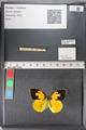 http://mczbase.mcz.harvard.edu/specimen_images/ent-lepidoptera/images/2011_02_24/IMG_072779.JPG