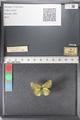 http://mczbase.mcz.harvard.edu/specimen_images/ent-lepidoptera/images/2011_02_27/IMG_072817.JPG