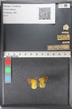 http://mczbase.mcz.harvard.edu/specimen_images/ent-lepidoptera/images/2011_02_27/IMG_072820.JPG