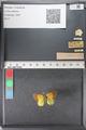 http://mczbase.mcz.harvard.edu/specimen_images/ent-lepidoptera/images/2011_02_27/IMG_072821.JPG
