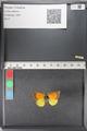 http://mczbase.mcz.harvard.edu/specimen_images/ent-lepidoptera/images/2011_02_27/IMG_072822.JPG