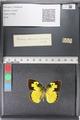 http://mczbase.mcz.harvard.edu/specimen_images/ent-lepidoptera/images/2011_02_28/IMG_072853.JPG