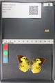 http://mczbase.mcz.harvard.edu/specimen_images/ent-lepidoptera/images/2011_02_28/IMG_072890.JPG