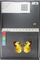 http://mczbase.mcz.harvard.edu/specimen_images/ent-lepidoptera/images/2011_02_28/IMG_072892.JPG