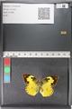 http://mczbase.mcz.harvard.edu/specimen_images/ent-lepidoptera/images/2011_02_28/IMG_072896.JPG