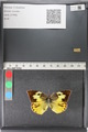 http://mczbase.mcz.harvard.edu/specimen_images/ent-lepidoptera/images/2011_02_28/IMG_072897.JPG