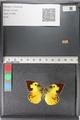 http://mczbase.mcz.harvard.edu/specimen_images/ent-lepidoptera/images/2011_02_28/IMG_072903.JPG