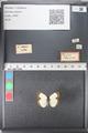 http://mczbase.mcz.harvard.edu/specimen_images/ent-lepidoptera/images/2011_03_04/IMG_074455.JPG