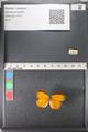 http://mczbase.mcz.harvard.edu/specimen_images/ent-lepidoptera/images/2011_03_07/IMG_074715.JPG