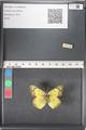 http://mczbase.mcz.harvard.edu/specimen_images/ent-lepidoptera/images/2011_03_15/IMG_076753.JPG