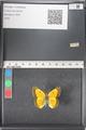 http://mczbase.mcz.harvard.edu/specimen_images/ent-lepidoptera/images/2011_03_15/IMG_076759.JPG