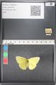 http://mczbase.mcz.harvard.edu/specimen_images/ent-lepidoptera/images/2011_03_16/IMG_077006.JPG