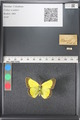 http://mczbase.mcz.harvard.edu/specimen_images/ent-lepidoptera/images/2011_03_16/IMG_077022.JPG