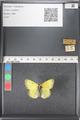 http://mczbase.mcz.harvard.edu/specimen_images/ent-lepidoptera/images/2011_03_16/IMG_077023.JPG