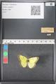 http://mczbase.mcz.harvard.edu/specimen_images/ent-lepidoptera/images/2011_03_16/IMG_077024.JPG
