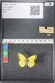 http://mczbase.mcz.harvard.edu/specimen_images/ent-lepidoptera/images/2011_03_16/IMG_077025.JPG
