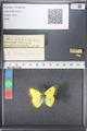 http://mczbase.mcz.harvard.edu/specimen_images/ent-lepidoptera/images/2011_03_16/IMG_077067.JPG