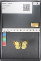 http://mczbase.mcz.harvard.edu/specimen_images/ent-lepidoptera/images/2011_03_16/IMG_077068.JPG