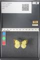 http://mczbase.mcz.harvard.edu/specimen_images/ent-lepidoptera/images/2011_03_16/IMG_077070.JPG