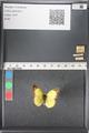 http://mczbase.mcz.harvard.edu/specimen_images/ent-lepidoptera/images/2011_03_16/IMG_077081.JPG
