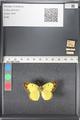 http://mczbase.mcz.harvard.edu/specimen_images/ent-lepidoptera/images/2011_03_16/IMG_077082.JPG