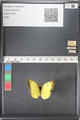 http://mczbase.mcz.harvard.edu/specimen_images/ent-lepidoptera/images/2011_03_16/IMG_077084.JPG