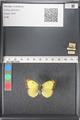 http://mczbase.mcz.harvard.edu/specimen_images/ent-lepidoptera/images/2011_03_16/IMG_077085.JPG