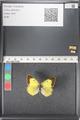 http://mczbase.mcz.harvard.edu/specimen_images/ent-lepidoptera/images/2011_03_16/IMG_077090.JPG