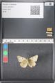 http://mczbase.mcz.harvard.edu/specimen_images/ent-lepidoptera/images/2011_03_16/IMG_077096.JPG