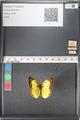 http://mczbase.mcz.harvard.edu/specimen_images/ent-lepidoptera/images/2011_03_16/IMG_077098.JPG