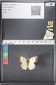 http://mczbase.mcz.harvard.edu/specimen_images/ent-lepidoptera/images/2011_03_16/IMG_077101.JPG