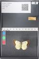 http://mczbase.mcz.harvard.edu/specimen_images/ent-lepidoptera/images/2011_03_17/IMG_077102.JPG
