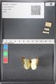 http://mczbase.mcz.harvard.edu/specimen_images/ent-lepidoptera/images/2011_03_17/IMG_077103.JPG