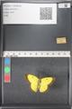 http://mczbase.mcz.harvard.edu/specimen_images/ent-lepidoptera/images/2011_03_17/IMG_077113.JPG