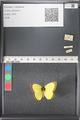 http://mczbase.mcz.harvard.edu/specimen_images/ent-lepidoptera/images/2011_03_17/IMG_077126.JPG