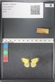 http://mczbase.mcz.harvard.edu/specimen_images/ent-lepidoptera/images/2011_03_17/IMG_077128.JPG