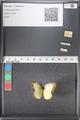 http://mczbase.mcz.harvard.edu/specimen_images/ent-lepidoptera/images/2011_03_17/IMG_077131.JPG
