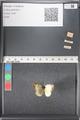 http://mczbase.mcz.harvard.edu/specimen_images/ent-lepidoptera/images/2011_03_17/IMG_077137.JPG