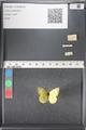 http://mczbase.mcz.harvard.edu/specimen_images/ent-lepidoptera/images/2011_03_17/IMG_077138.JPG