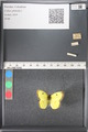 http://mczbase.mcz.harvard.edu/specimen_images/ent-lepidoptera/images/2011_03_17/IMG_077139.JPG