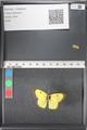 http://mczbase.mcz.harvard.edu/specimen_images/ent-lepidoptera/images/2011_03_17/IMG_077144.JPG