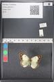 http://mczbase.mcz.harvard.edu/specimen_images/ent-lepidoptera/images/2011_03_17/IMG_077220.JPG